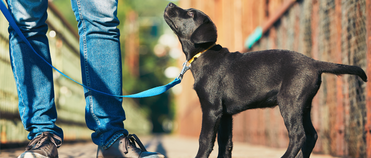 Exercising with your Puppy - What you Need to Know