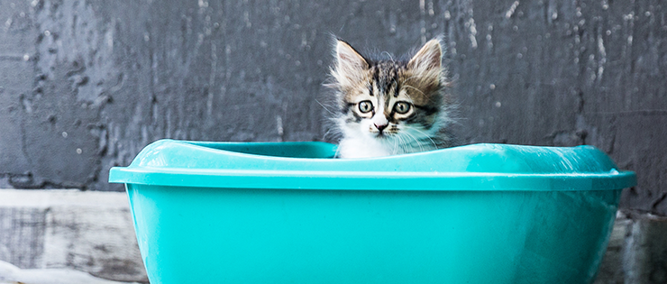 Training your kitten to use the litter