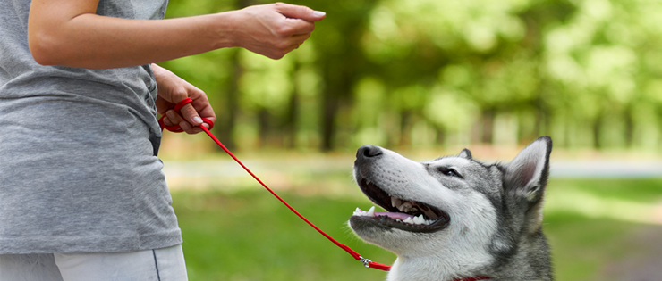 Top Tips for Communicating with and Training a Deaf Dog
