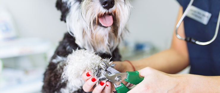 How to Clip Your Dog's Nails