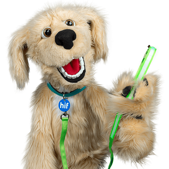 Insurance For Dogs >> Pet Insurance By Hif Affordable Cover For Cats Dogs
